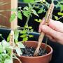 palántázás bambusz fogkefével
